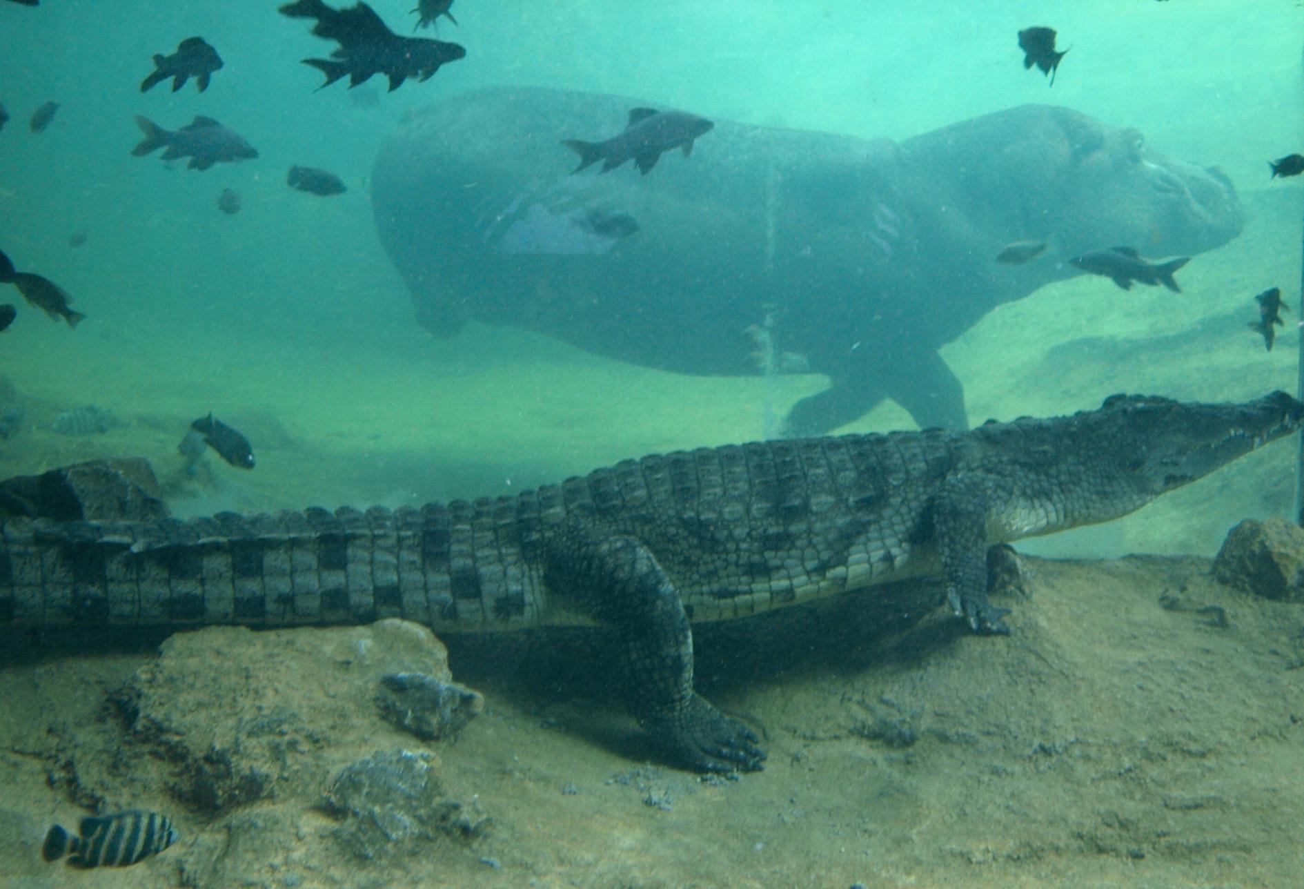 Bioparc valencia cientos de peces de colores mantienen for Peces agua dulce