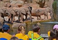 Grupo escolar observando a la manada de los elefantes - BIOPARC VALENCIA