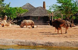 Visión de la cafetería de la Sabana con Rinoceronte y Avestruces