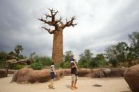 Zoológico de Turín - Madagascar